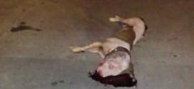 Buscan justicia para perro asesinado salvajemente