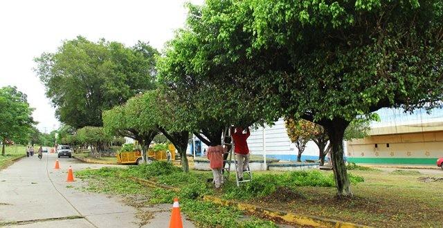 Ayuntamiento de Minatitlán, da mantenimiento a las áreas verdes de la ciudad