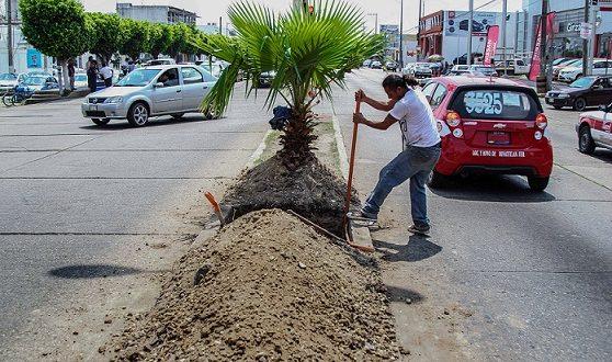 Ayuntamiento de Minatitlán instala postes para colocar nuevo alumbrado pulico