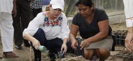 Apoya Gobierno de la República a cafeticultores del totonacapan